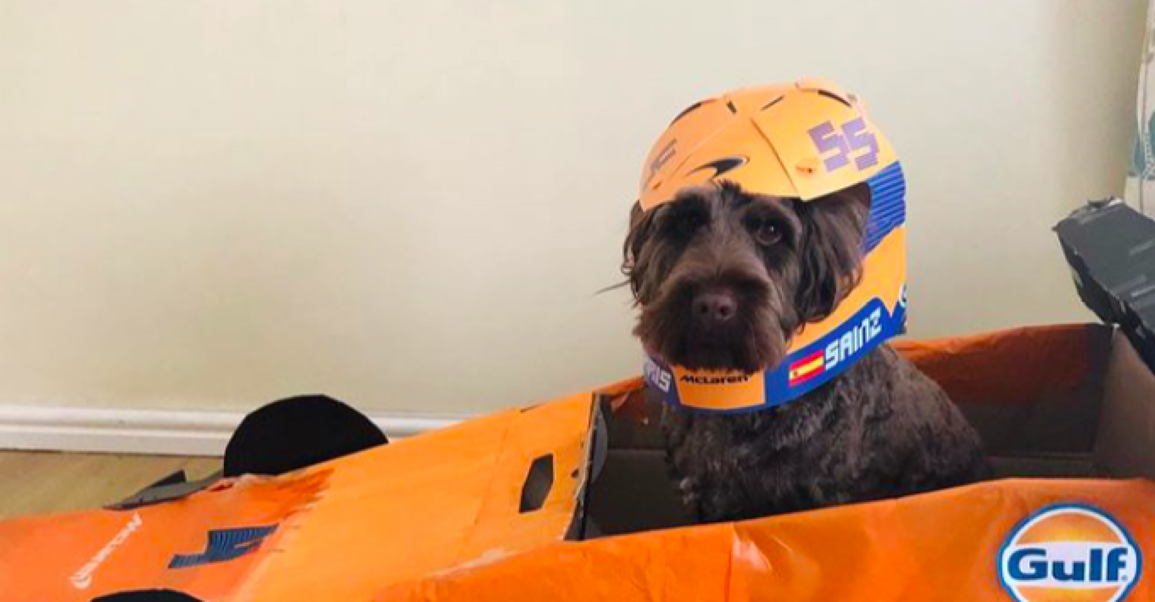 @mclarendoggo, Fraggile Instagram dog kutya